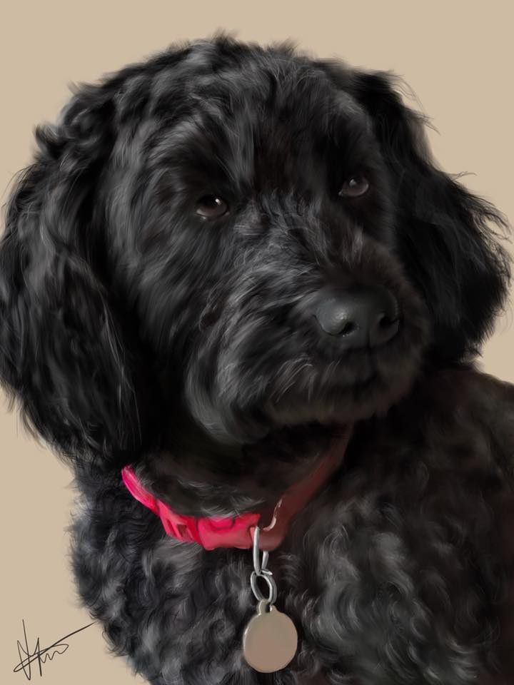 Digital drawing of a cockerpoo